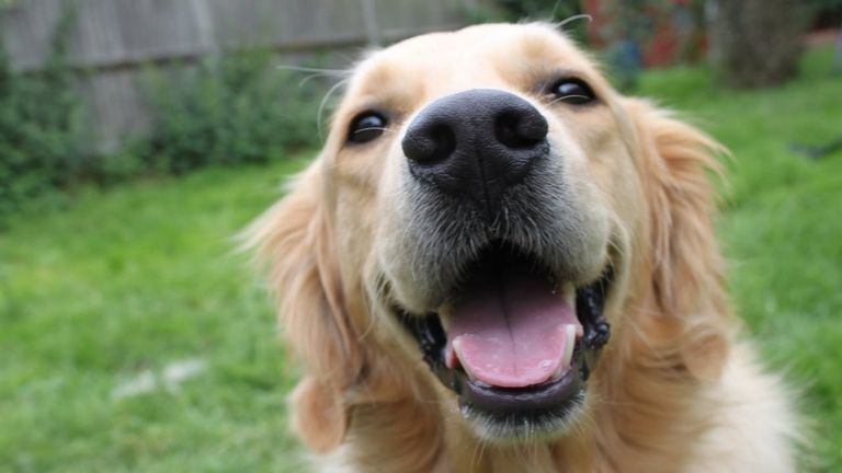 10 Cutest Dog Breeds In The World