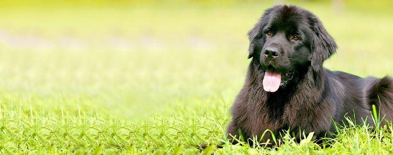 12 Letter Dog Breeds