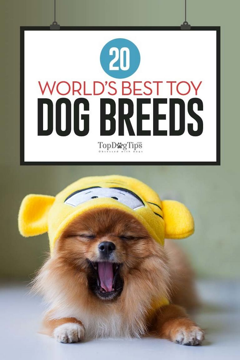 20 Best Dog Breeds For Anxiety