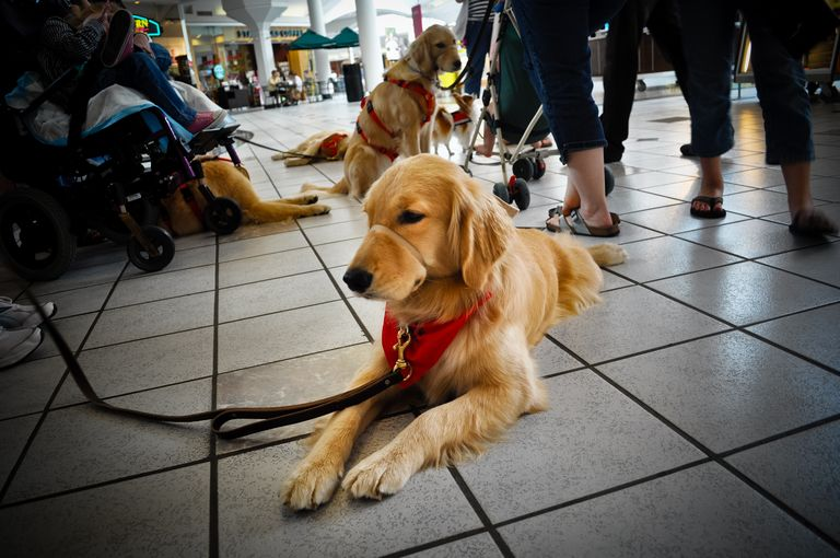 4 Paws For Ability Dog Breeds