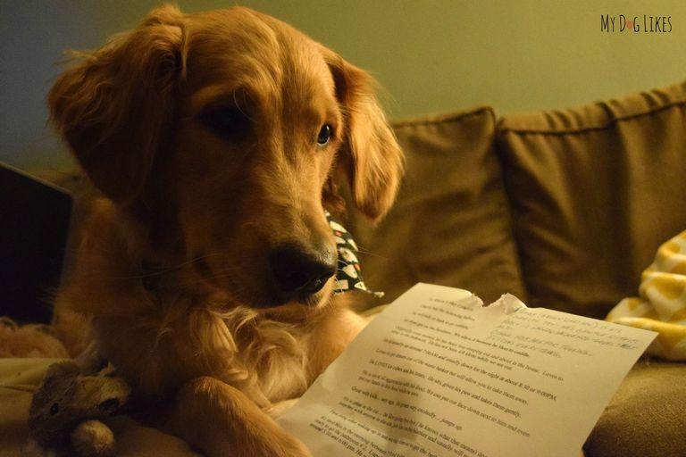 8 Letter Dog Breeds