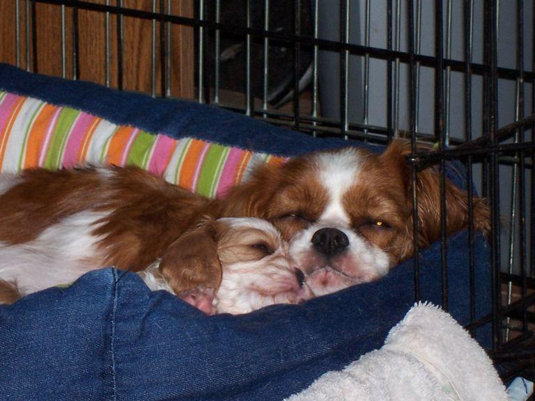 Abby's Pups Newnan Ga