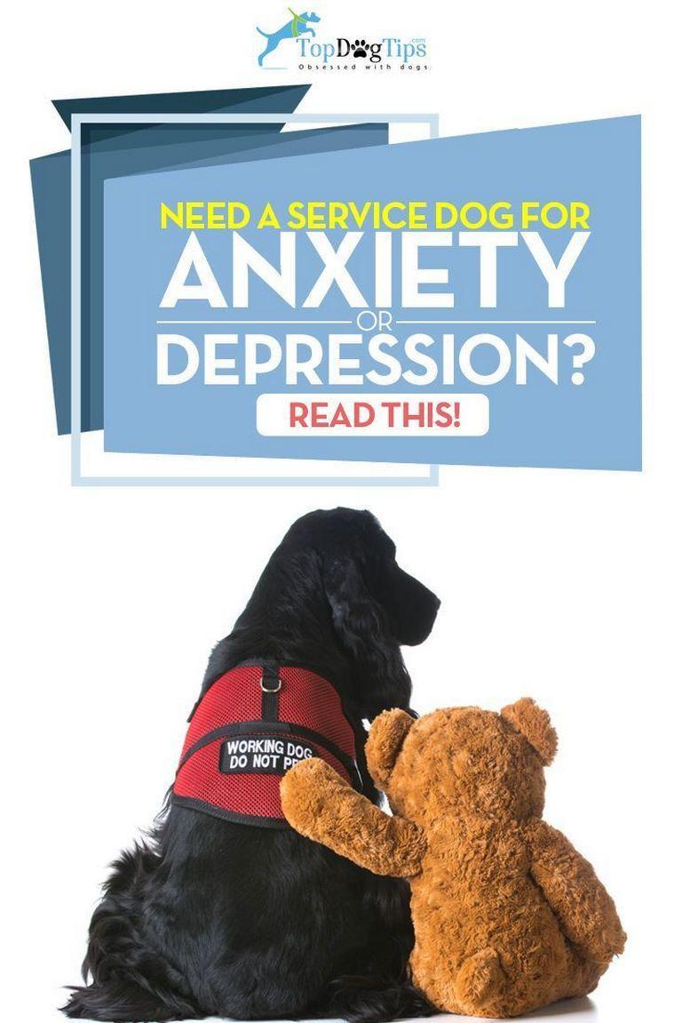 Adopt A Service Dog For Depression