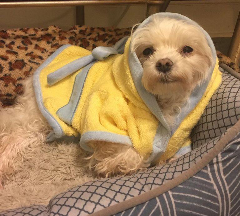 Adopt A Small Dog Near You