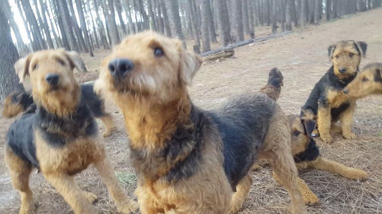 Airedale Breeders Washington State