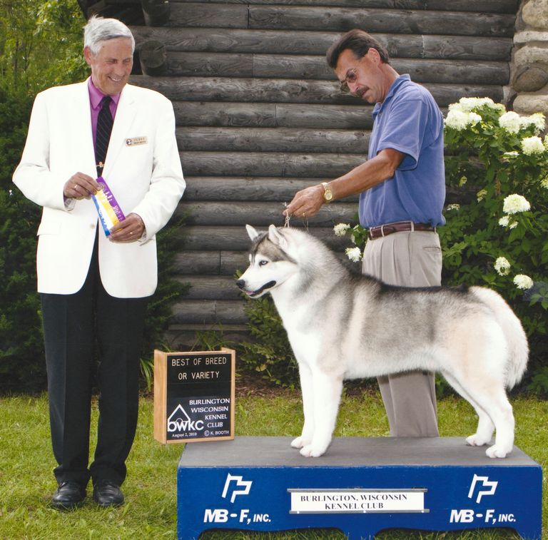 Akc Judge Requirements