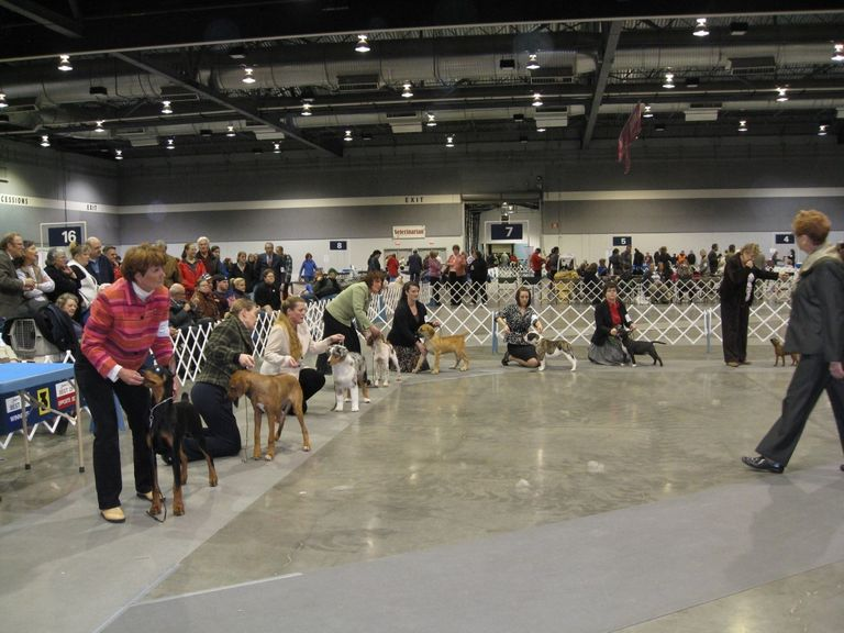 Akc Points And Awards
