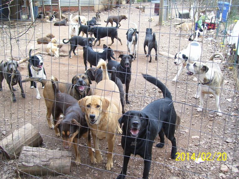 Alabama Animal Shelter