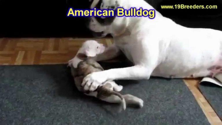 American Bulldog Rescue Alabama