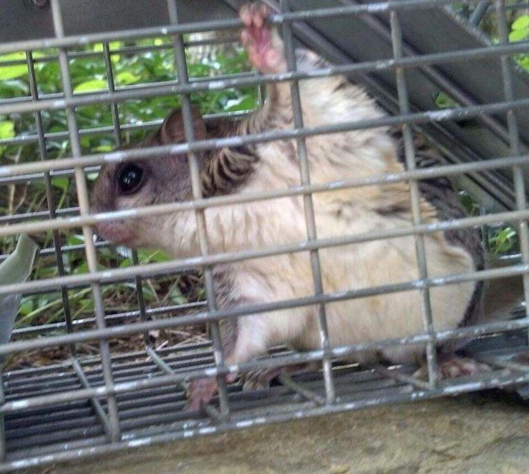 Animal Control Lexington Ky