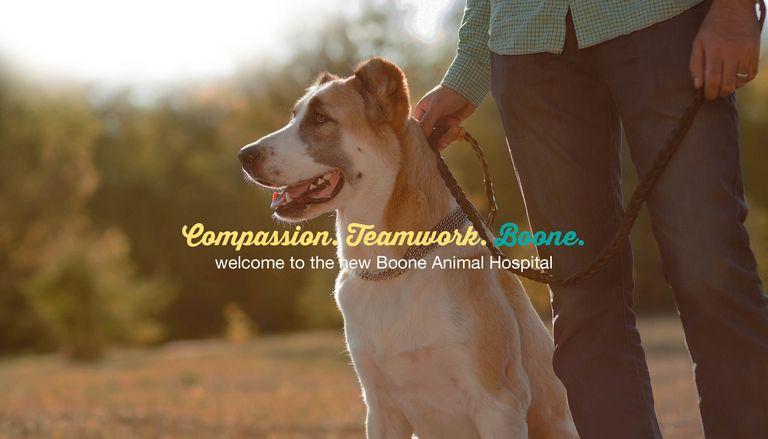Animal Hospital Of Boone