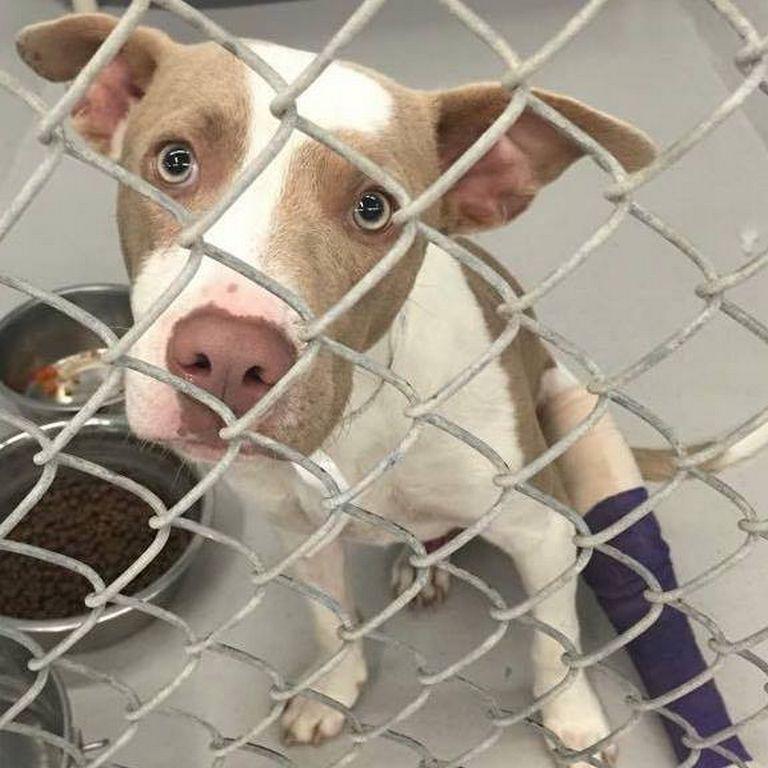 Animal Rescue Movement Middleburg, Fl