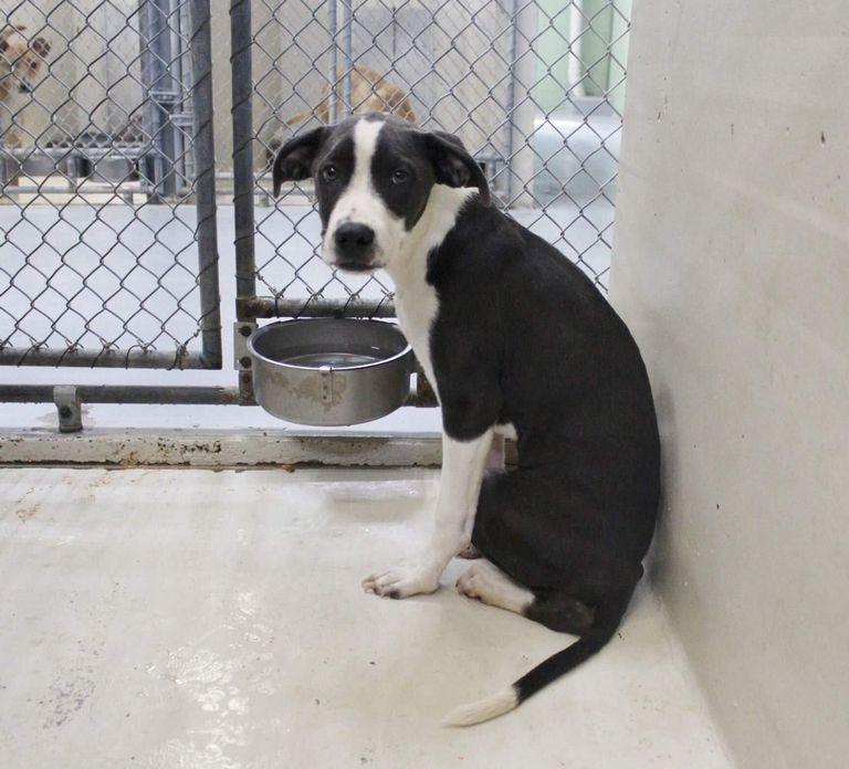 Animal Shelter Ross Ohio
