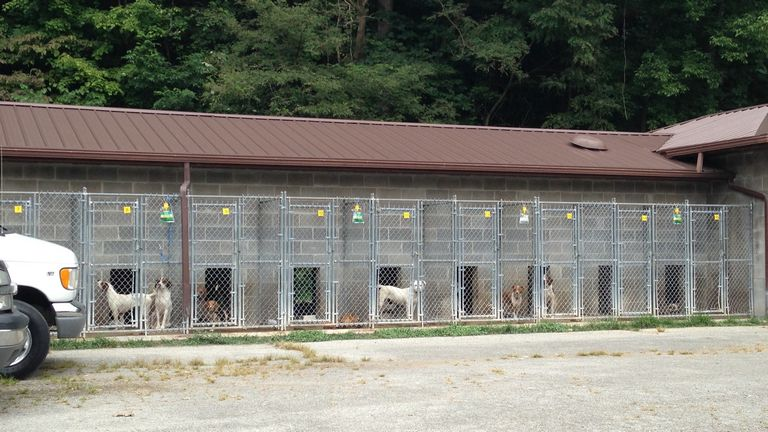Animal Shelters In Ky