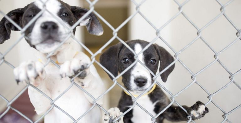 Animal Shelters In Maine