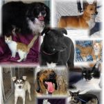 Antigo, Wi Animal Shelter