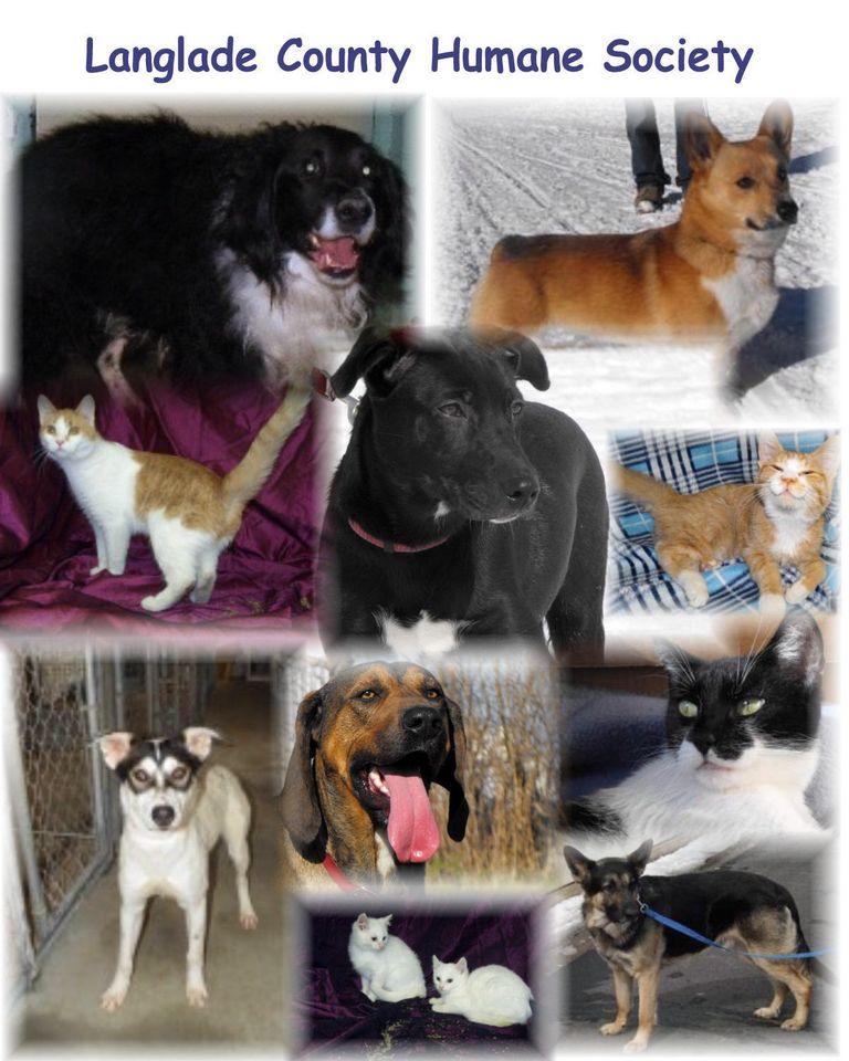 Antigo, Wi Animal Shelter
