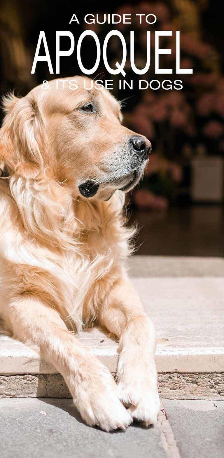 Apoquel Alternatives For Dogs
