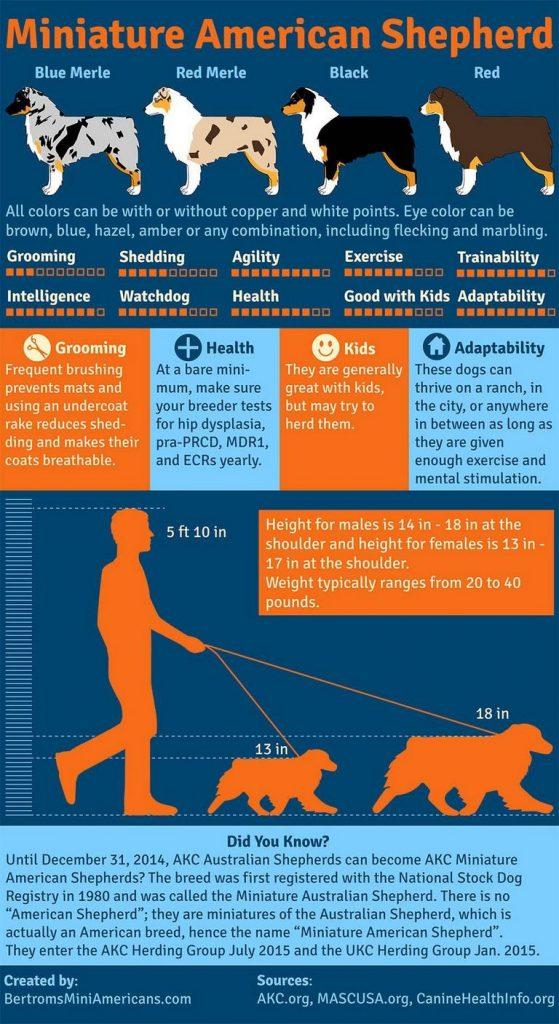 Australian Shepherd Chart