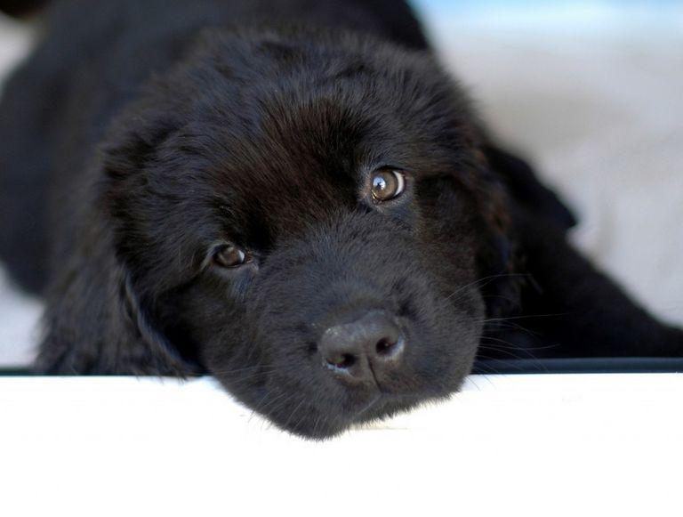 Badass Black Dog Names (1)