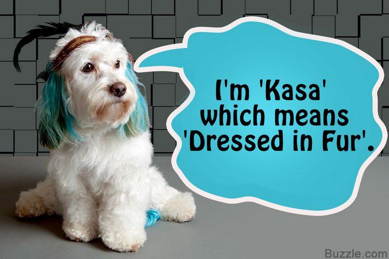 Badass Boxer Dog Names