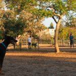 Balboa Park Dog Park (1)