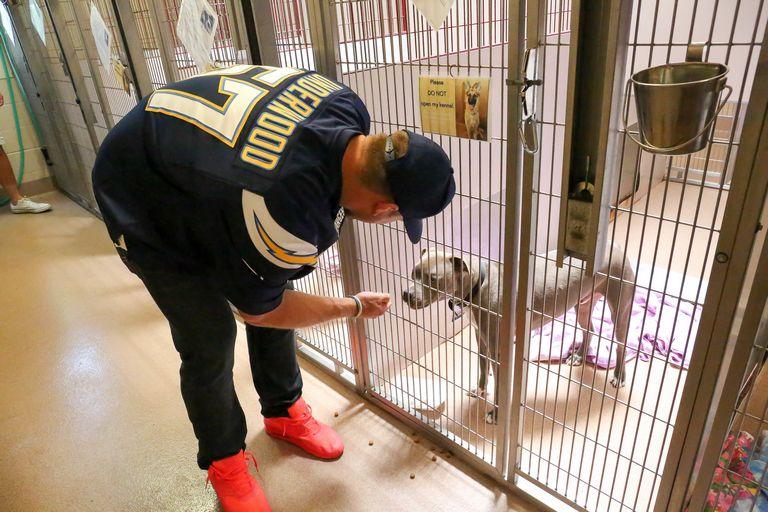 Bark Animal Shelter