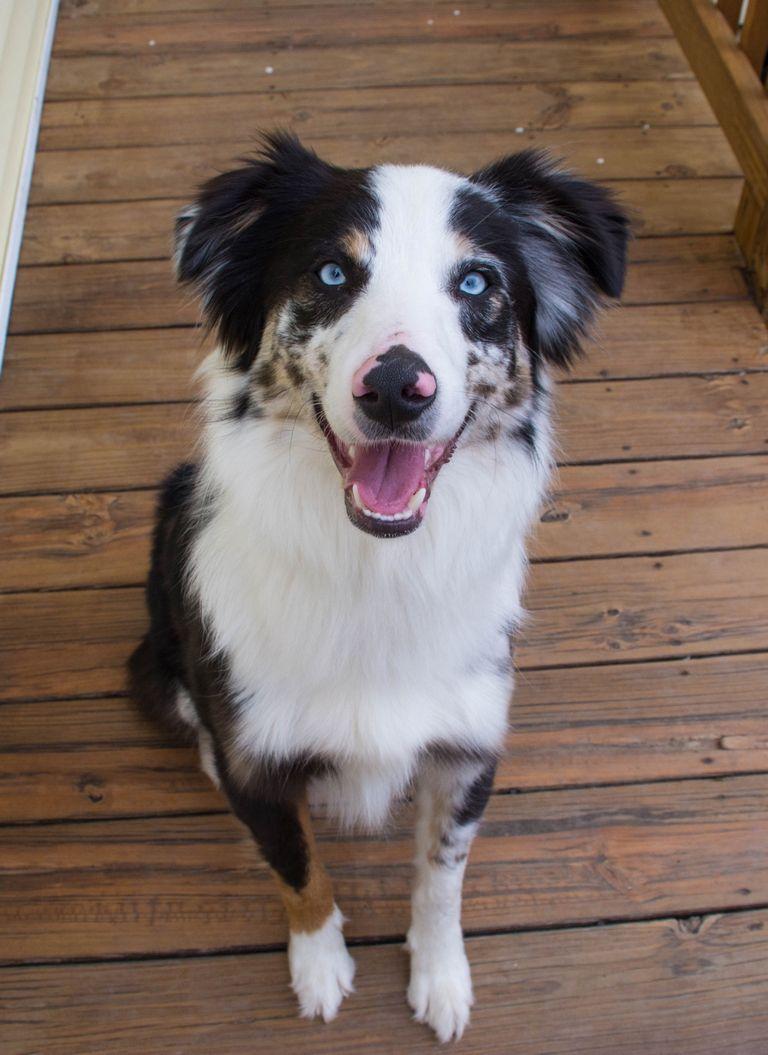 Bark Aussie Rescue (1)