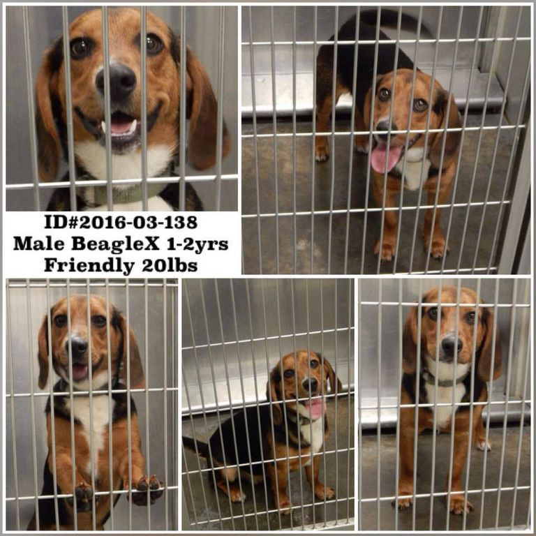 Barrow County Animal Shelter (1)
