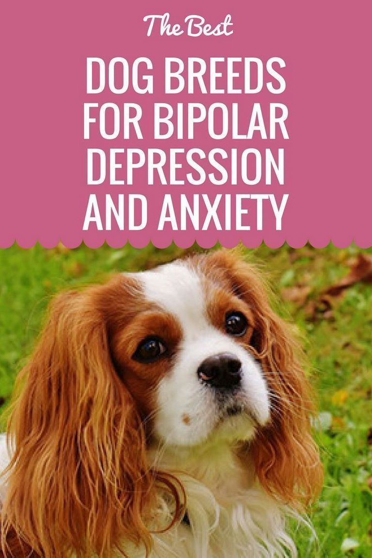 Best Dog Breeds For Bipolar
