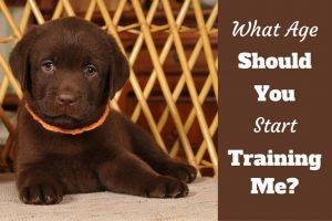 Best Dog Training Books 2018