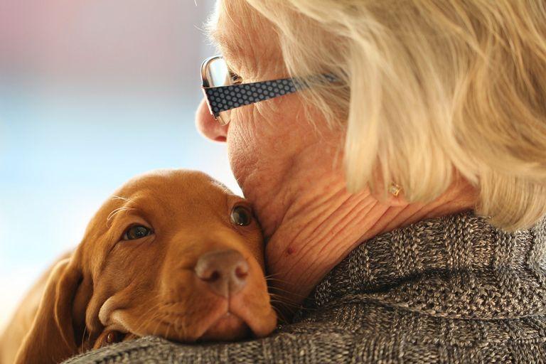 Best Dogs For Seniors Aarp