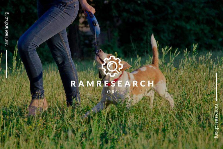 Best Retractable Dog Leash 2018