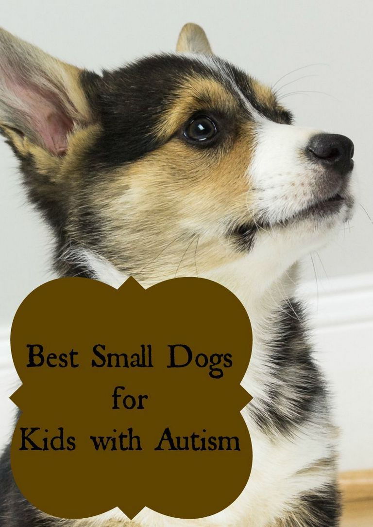 Best Therapy Dog Breeds For Autism