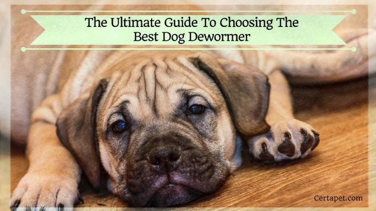 Best Wormer For Puppies