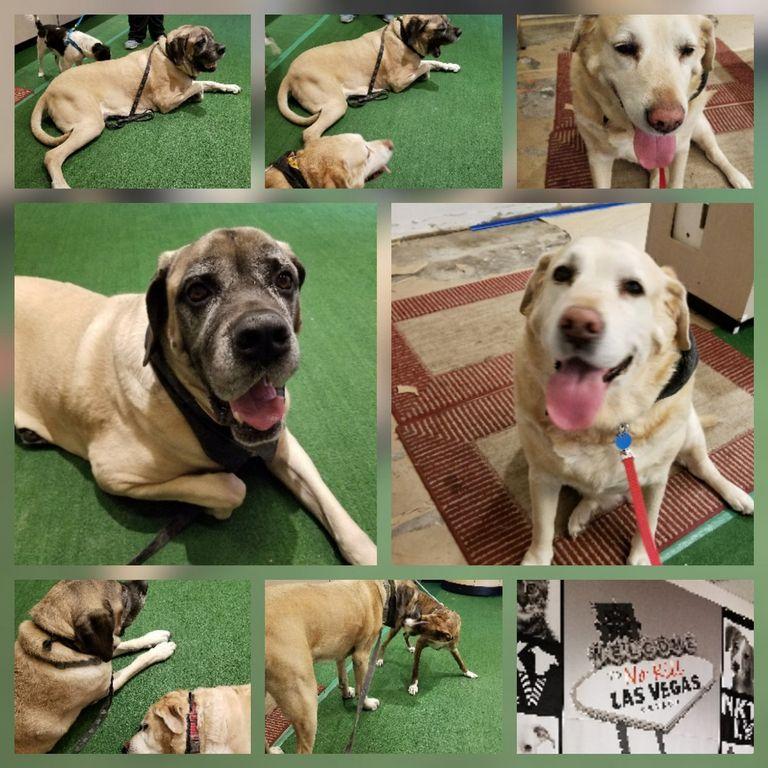 Big Dog Rescue Las Vegas