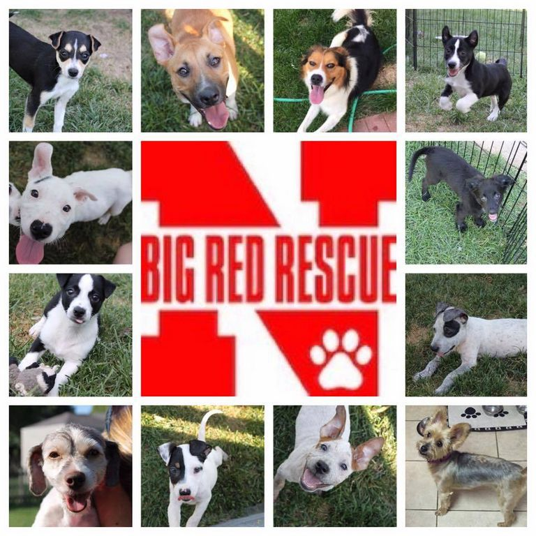 Big Red Rescue