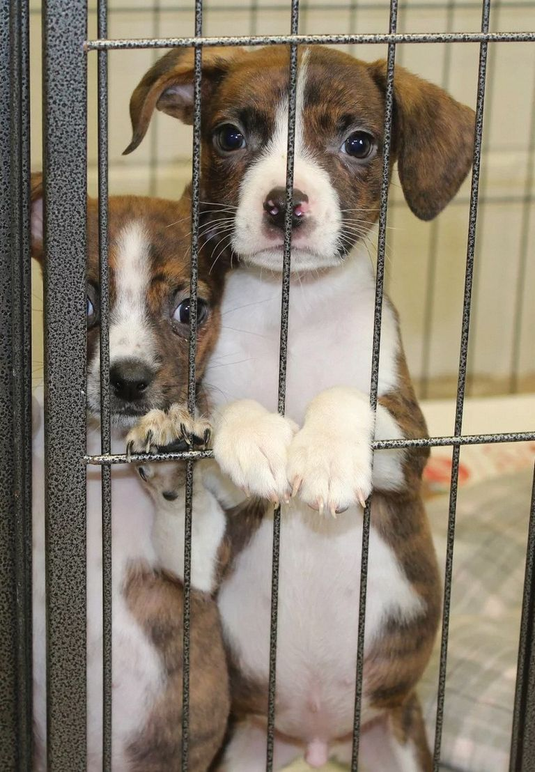Blount County Animal Shelter