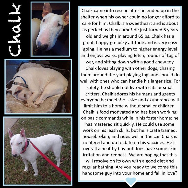 Blue Ridge Bull Terrier Rescue