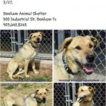 Bonham Tx Animal Shelter