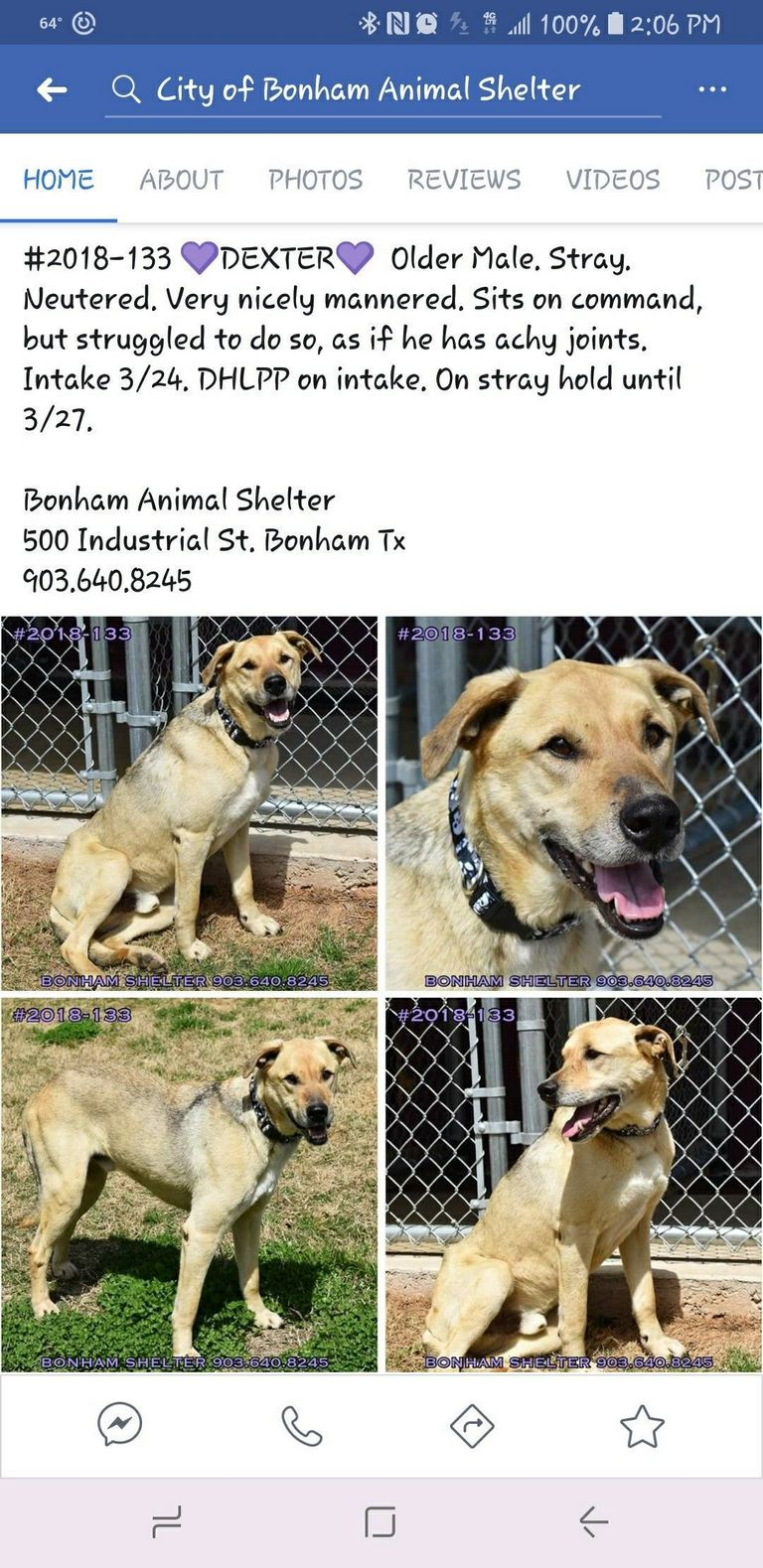 Bonham Tx Animal Shelter