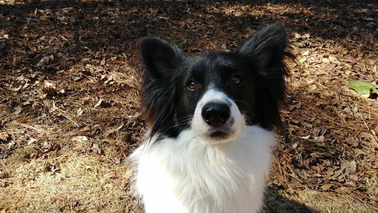 Border Collie Rescue Georgia