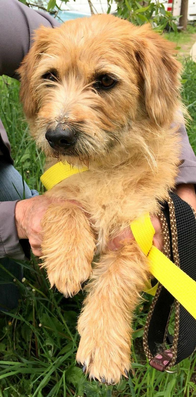 Border Terrier Breeders Ct