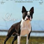 Boston Terrier Breeders In Md