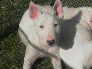 Bernedoodle Ohio | Top Dog Information