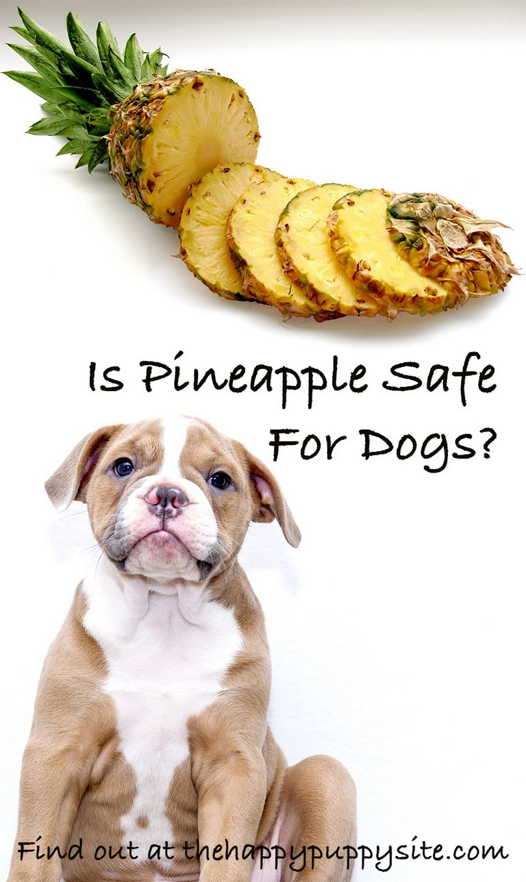 Can Dogs Eat Dried Pineapple
