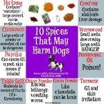 Can Dogs Eat Saffron