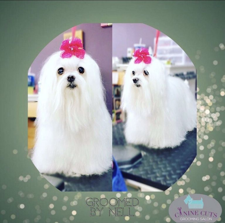 Canine Cuts Dog & Cat Grooming Salon Lynchburg, Va