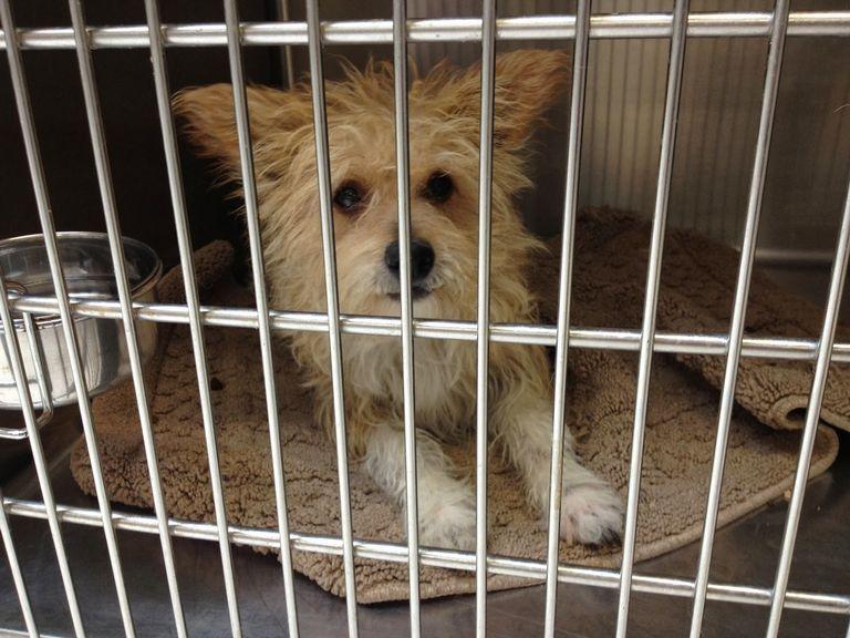 Canyon County Animal Shelter