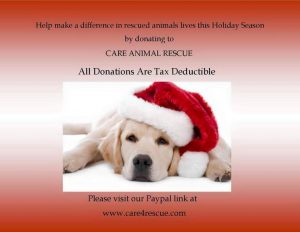 Care Animal Rescue